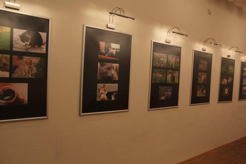fotokokalj13-24